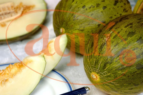 Fruta fresca (melón)