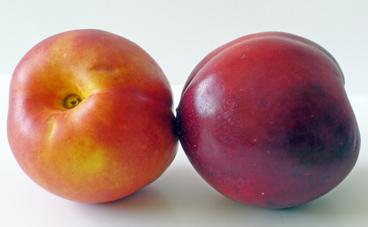 Fruta fresca (pavía)
